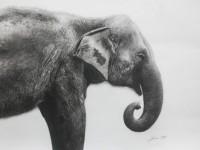 Mohamad Sazri_Asian Elephant